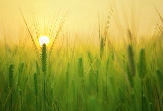ANM, veste bună pentru agricultori. Cum va fi vremea în perioada 12-18 mai 2021