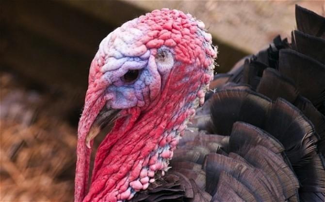 ANSVSA: Extinderea gripei aviare ar putea înăspri restricțiile