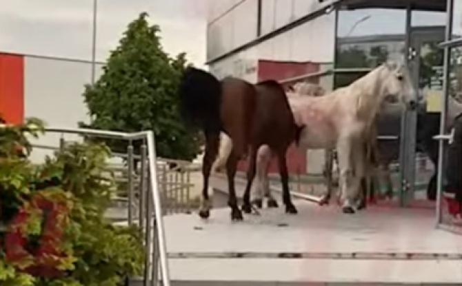 """Trei cai """"în călduri"""" au făcut ravagii în centrul Vasluiului /  Sursă foto: Captură Youtube"""