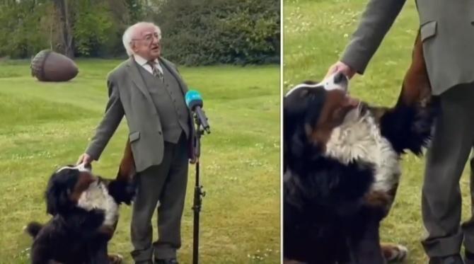 Câinele președintelui Irlandei a început să se joace cu stăpânul său în timp ce acesta oferea un interviu / Sursă foto: Captură Youtube