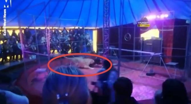 Circar, atacat de un leu în timpul unui spectacol / Caputură video: Metro