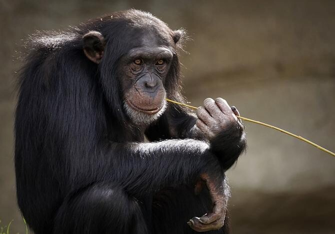 VIDEO viral. O tânără a sărit gardul la zoo / Foto: Pixabay