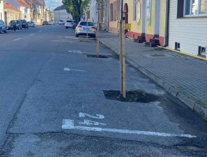 Copaci plantați în parcare/ foto alba24