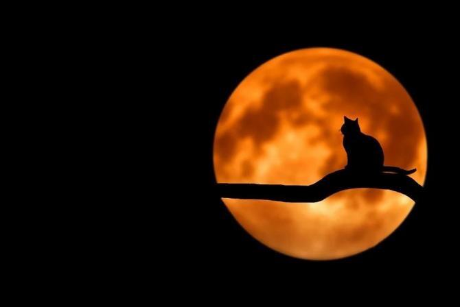 Pixabay / Pisică blocată pe stâlp