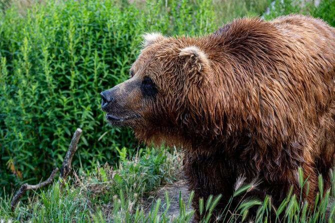 Urs / Fotografie creată de Brett Sayles, de la Pexels