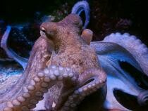 NASA trimite 128 de calamari în spațiu / Foto: Pixabay