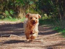 Povestea emoționantă a unui câine care și-a regăsit stăpânii după 11 ani / Foto: Pixabay