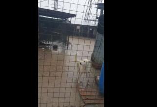 """VIDEO COD PORTOCALIU 18 iunie. 500 de câini, inundați: """"Nu am trăit niciodată ce trăim acum. Suntem neputincioși, plângem de disperare"""""""