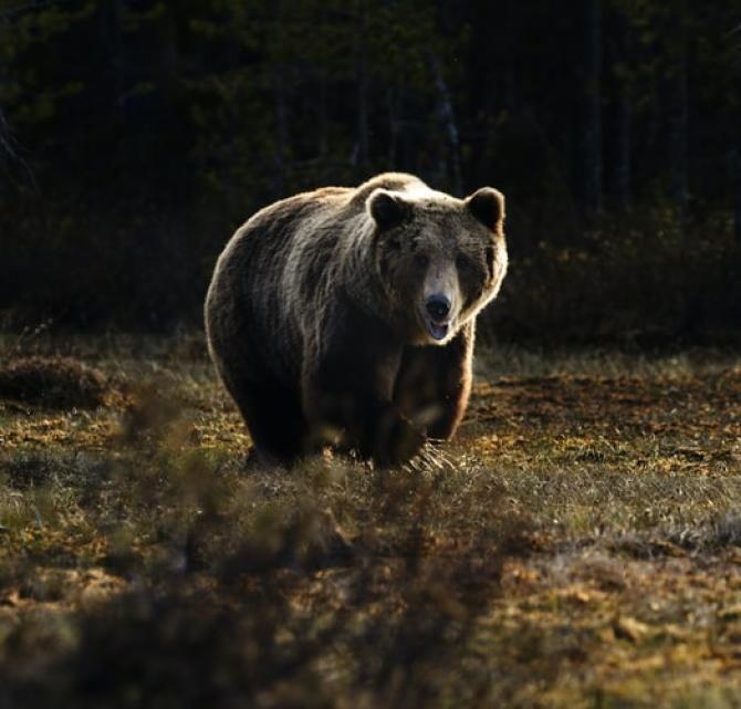 Bărbat, grav rănit după ce a fost atacat de un urs. Marinescu propune câteva soluții / Foto: Unsplash