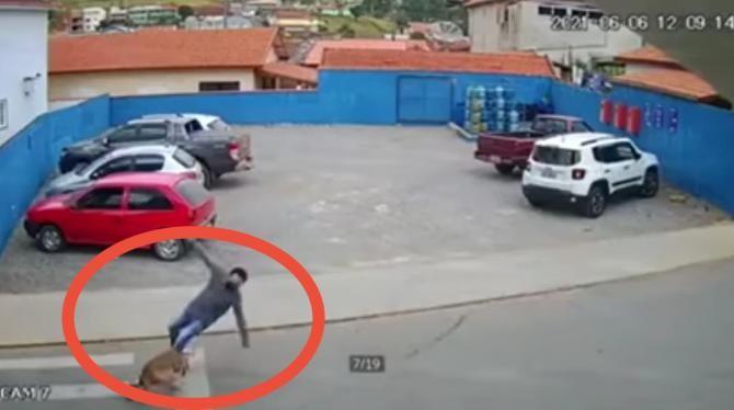 Tânăr din Botoșani, lovit de un câine pe trecere de pietoni / Foto: Captură video