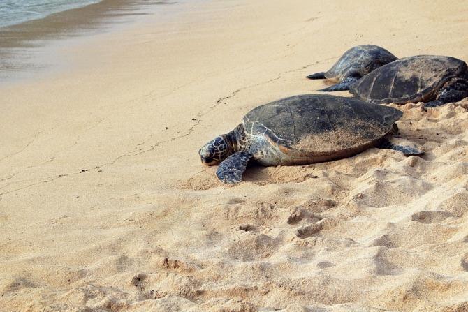 Căuta broaște țestoase, dar a găsit cocaină în valoare de 1,2 milioane de dolari / Foto: Pixabay