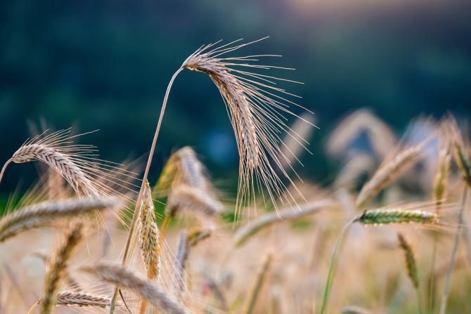 Pixabay / Colaborare în domeniul agroalimentar