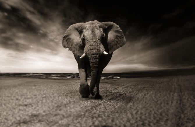 Elefanții au făcut prăpăd în China / Foto: Pixabay