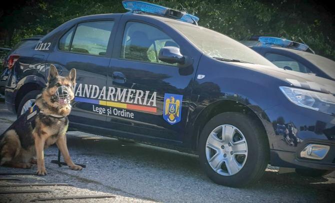 Un bărbat a murit după s-a izbit în plin de o mașină a Jandarmeriei / Foto cu caracter ilustrativ: Jandarmeria Română