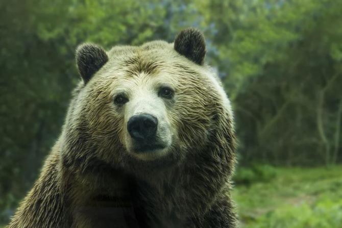 Pixabay / Un urs și-a făcut apariția în județul Galați