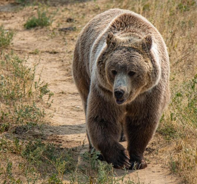 Un urs de 250 de kg a murit după ce a fost lovit de o mașină, în Cluj / Foto: Unsplash