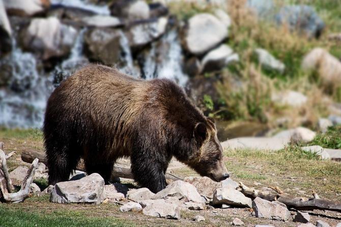 Pixabay / O adolescentă a dat nas în nas cu un urs în parc