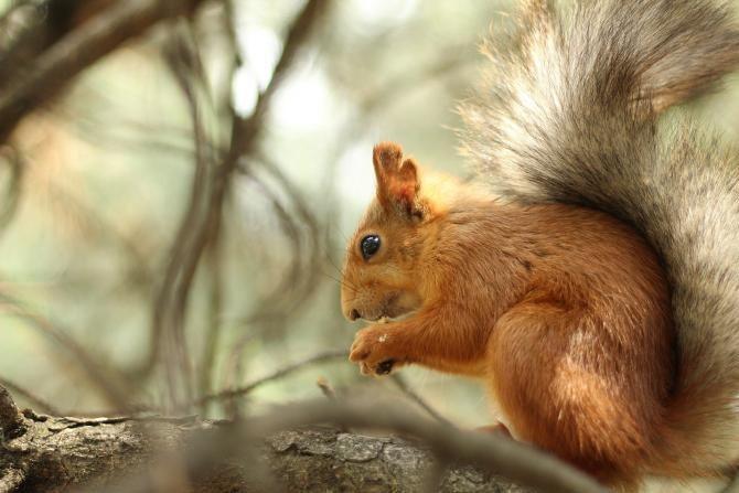 Un copil care vâna veverițe și-a împușcat unchiul în cap, după ce glonțul a ricoșat / Foto: Pixabay