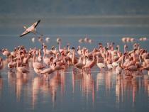 Mii de pui de flamingo, găsiți morți într-un lac din Turcia / Foto: Pixabay
