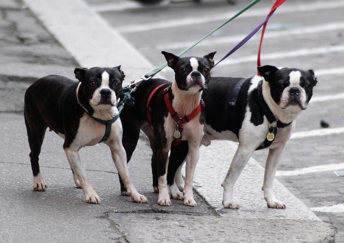 Proprietarii de câini trebuie să furnizeze mostre din ADN-ul animalelor / Foto: Pixabay