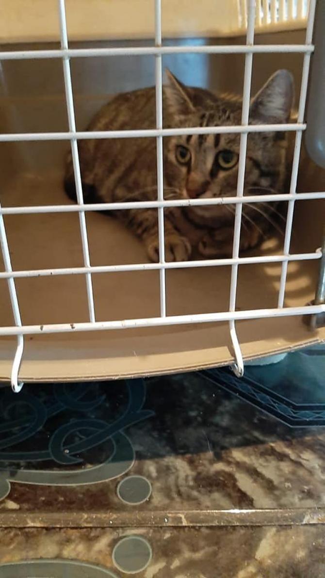 Sursa foto: SOS Animal Rescue