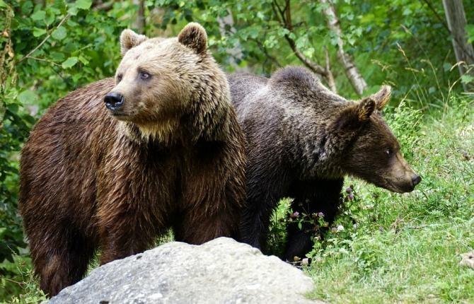 Mărturia cutremurătoare a unui bărbat atacat de urs / Foto: Unsplash