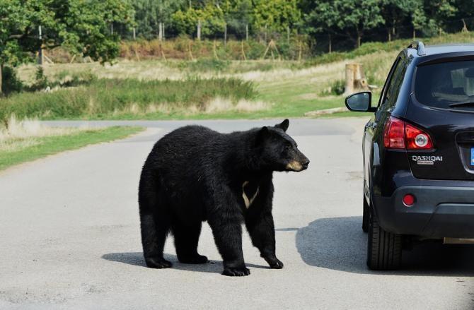 Un urs, accidentat mortal de un autoturism pe DN 1, în apropiere de Ploieşti / Foto: Pixabay