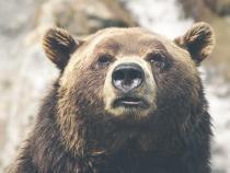 Alertă la Lacul Colibița. Un urs agresiv a intrat în curtea unei pensiuni  /  Foto cu caracter ilustrativ: Pixabay