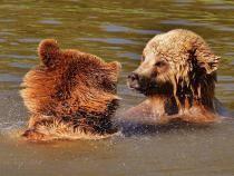 O familie de urși se relaxează într-o piscină, la munte / Foto: Pixabay