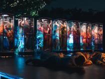 """Proiect inedit la FITS. """"Reflexii"""", un spectacol de dans elaborat, creat în cadrul """"People Power Partnership"""" - Foto Călin Mureșan"""