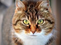 8 august - Ziua Internațională a PISICII. Informații neștiute despre aceste feline / Foto: Pixabay