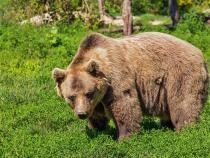 Întâlnire de gradul zero în pădure. Un urs și un mistreț, față în față. Cum au reacționat  / Foto: Pixabay