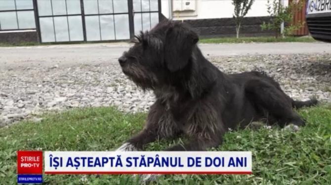 Povestea lui Obama, câinele din Mureș care își așteaptă de doi ani stăpânul în fața curții / Foto: Captură video PRO TV