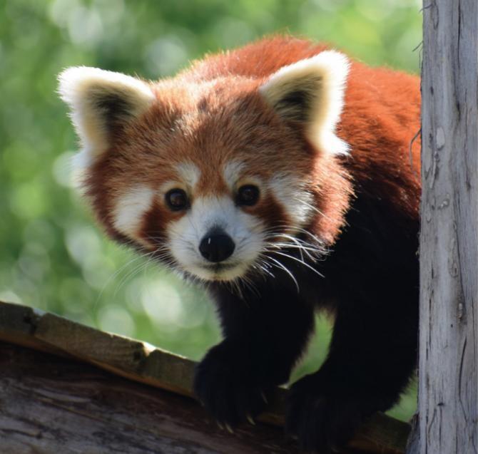 Foto: Facebook / Zoo Brașov