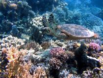 O colonie de corali cu vârsta de 600 de ani a fost descoperită în Marea Roșie / Foto: Pixabay