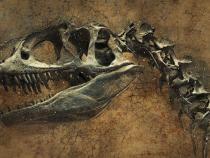 Cercetătorii au descoperit două noi specii de DINOZAUR / Foto: Pixabay