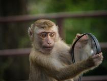 Un cățeluș a fost răpit și ținut ostatic de o maimuță timp de 3 zile / Foto: Pixabay