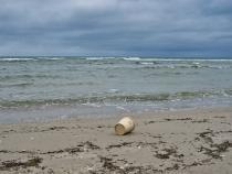 """""""Mucilagiul marin"""" din Marea Marmara riscă să se transforme într-un dezastru ecologic / Foto: Pixabay"""