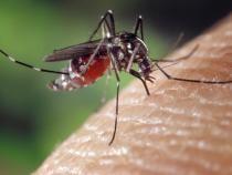 O universitate vrea să transforme țânțarii în seringi purtătoare de vaccin   /   Foto cu caracter ilustrativ: Pixabay