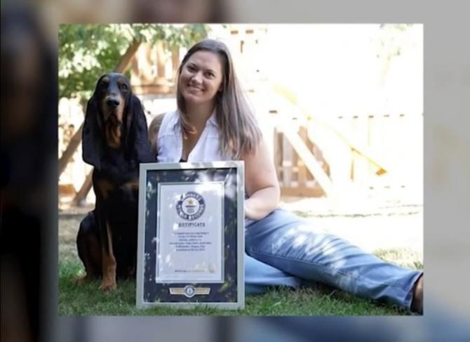 Câinele cu cele mai lungi urechi din lume / Foto: Captură video Realitatea Plus