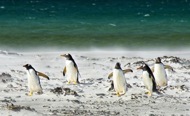 Zeci de pinguini, găsiți morți pe o plajă din Cape Town, după ce au fost atacați de un roi de albine   /  Foto cu caracter ilustrativ: Pixabay