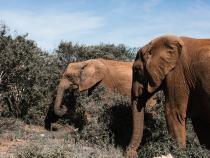 Pexels / BRACONAJUL de fildeș a dus la modificarea evoluției elefanților (STUDIU)