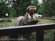 Hipopotamii lui Pablo Escobar, recunoscuți ca persoane juridice în SUA