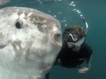 Un peşte-lună cu o greutate record de 2 tone, descoperit de biologi / Foto: Captură video National Geographic