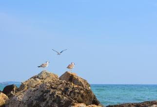 Prețurile de pe litoralul românesc, mai mari decât în Grecia? Murad: Dacă e așa, pe o comparație corectă, ofer gratuit 100 de pachete turistice