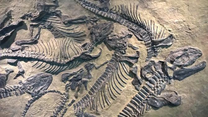 Cercetătorii ar fi identificat urme de ADN de dinozaur în fosile vechi de 125 de milioane de ani  /  Foto cu caracter ilustrativ: Pixabay
