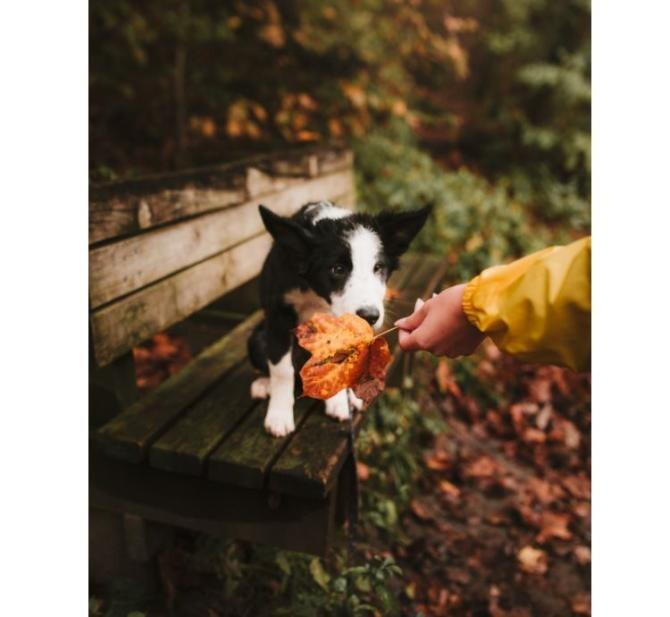 Vreme octombrie / Foto Pexels