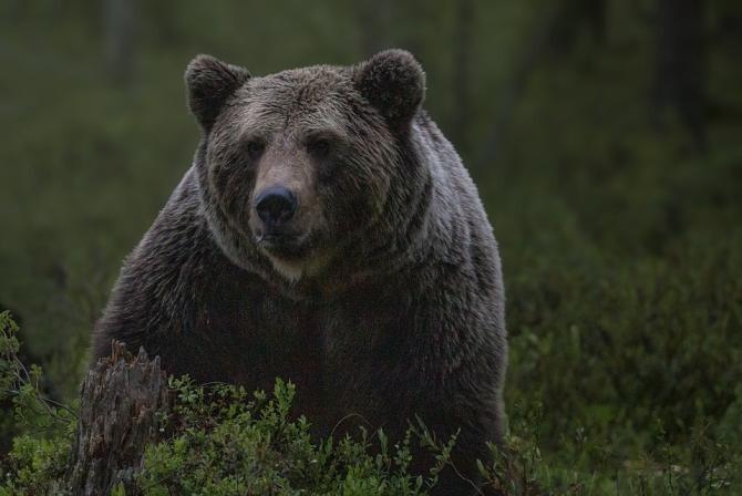 Un bărbat din Neamț, atacat de o ursoaică cu pui. De frică, acesta s-a ARUNCAT într-o PRĂPASTIE / Foto: Pixabay